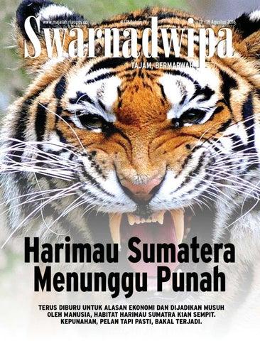70 Gambar Hewan Langka Harimau Sumatera HD Terbaik