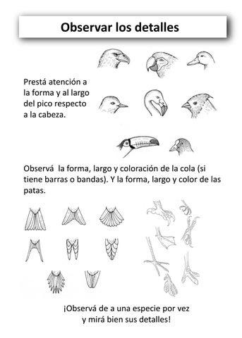 Cuadernillo observación de aves para niños by Aves Argentinas - issuu