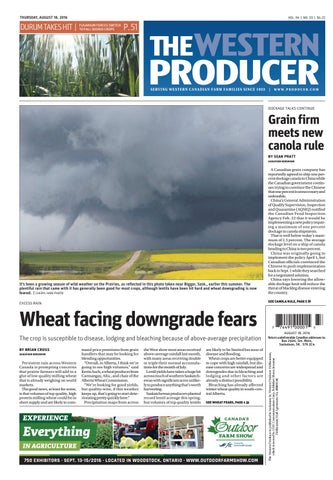 The western producer august 18, 2016 by The Western Producer - issuu