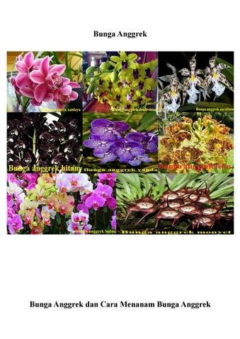 Mengetahui Cara Menanam Tanaman Bunga Anggrek By Aries Alfajri Issuu