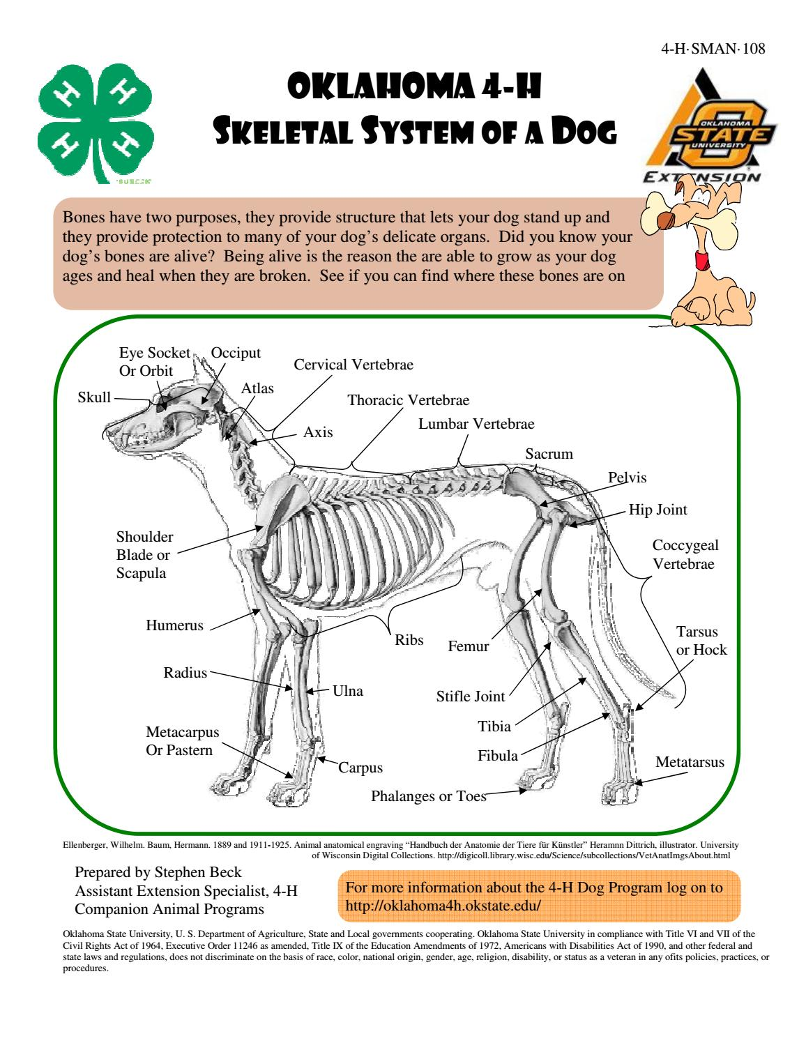 Perfect Dog Skeletal Structure Illustration - Anatomy and Physiology ...