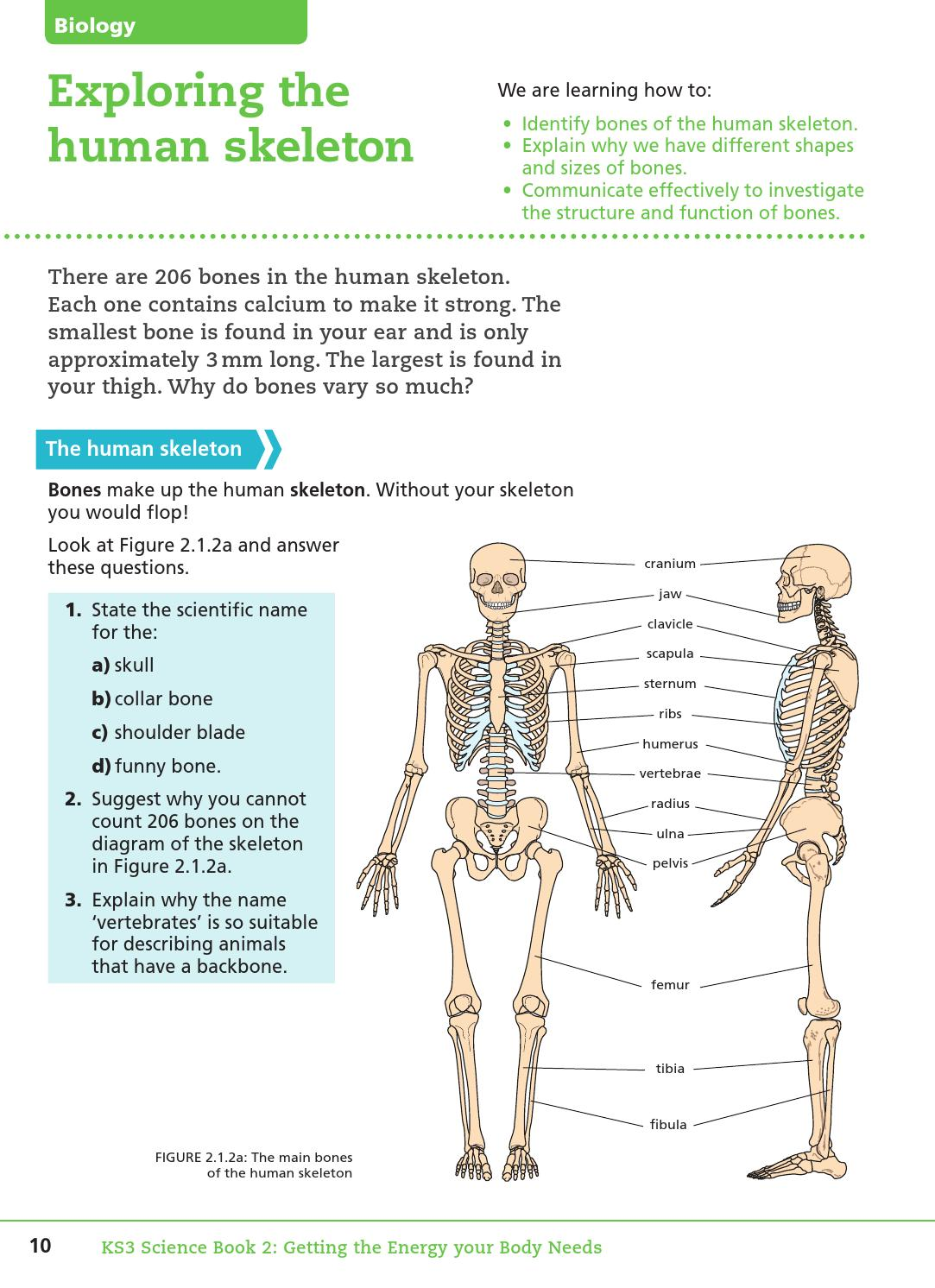 Key Stage Three Science: Student Book 2 by Collins - issuu