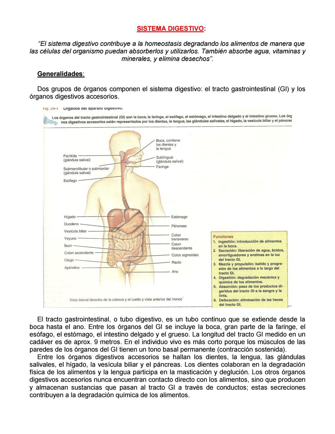 Trabajo de sistema digestivo completo by Alicia Zachary - issuu