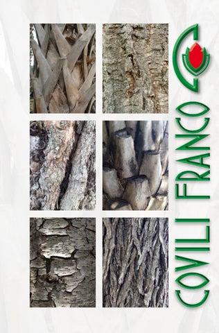 Viburnum rhytidophyllum Sempre verde lingua palla di neve willowwood 40-60cm