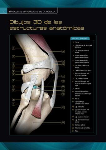 Patologías ortopédicas de la rodilla by Grupo Asís - issuu