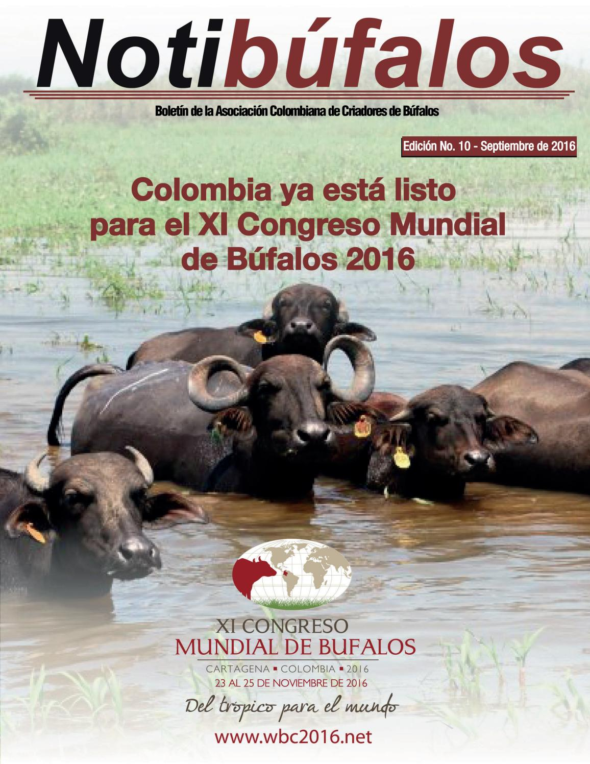 Notibúfalos 10 by comunicaciones asobufalos - issuu