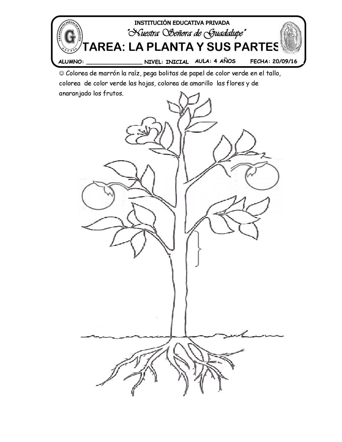 26 Tarea La Planta Y Sus Partes By Katy Hormiguita Issuu