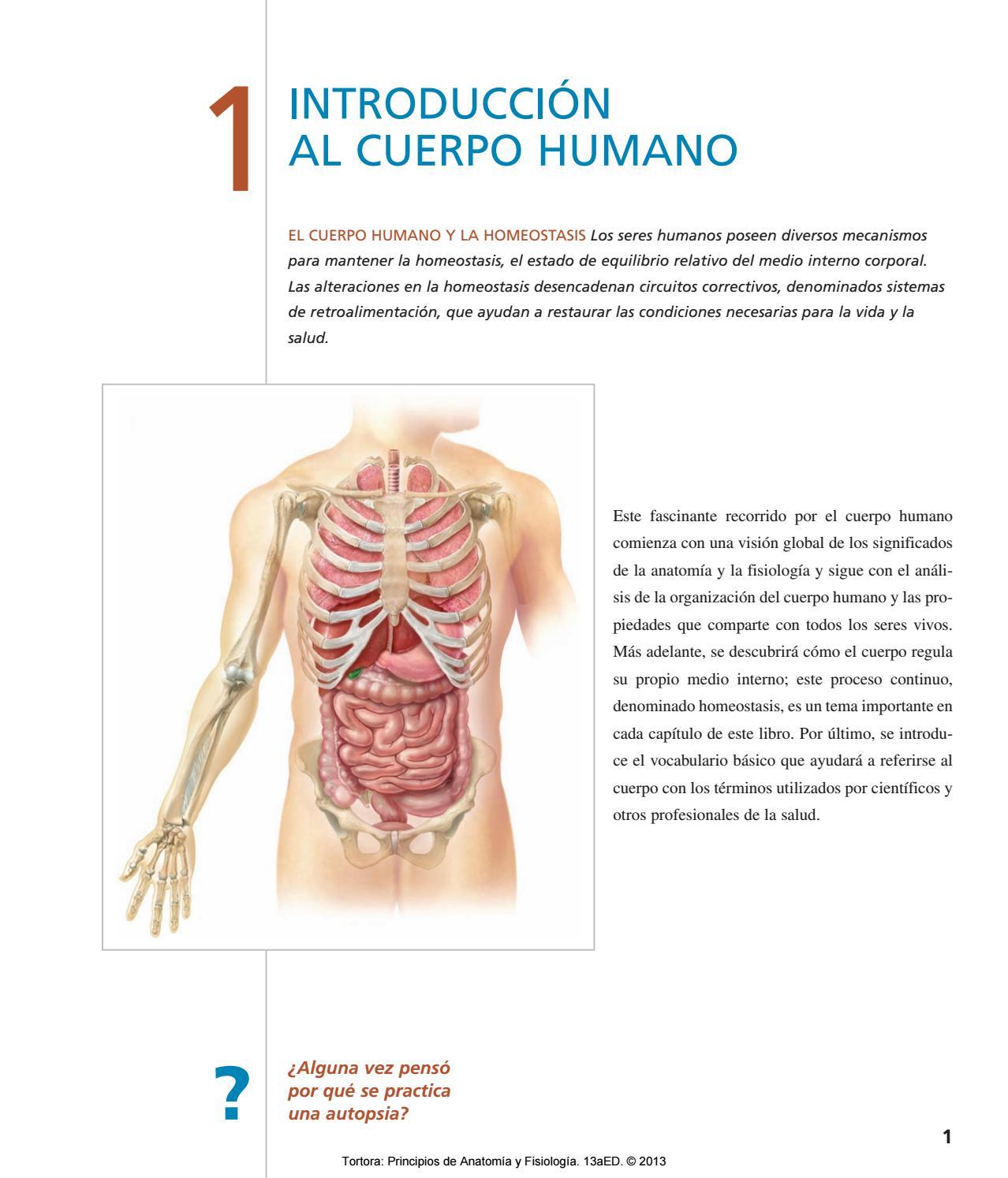 Excepcional Trazar órganos Anatomía Del Cuerpo Adorno - Anatomía de ...
