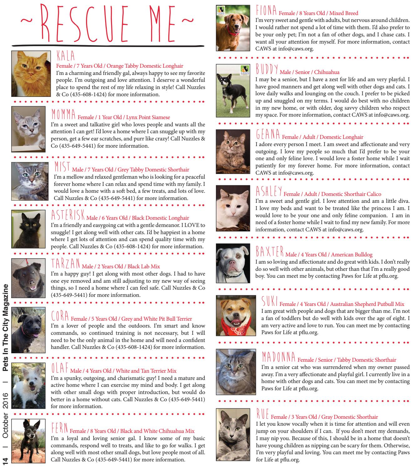 Pets in the City Magazine October Issue 2016 by Pets in the