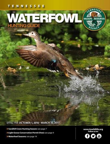 955ce4bdd0454 TN Waterfowl Guide 2016-2017 by Bingham Group - issuu