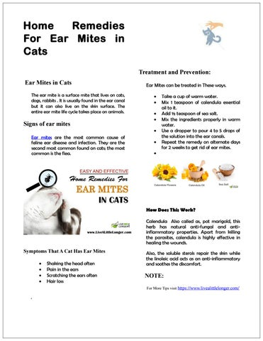 Home remedy for ear mites in cats by willthomos - issuu