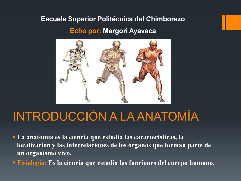 Introducción a la anatomía by Margori Ayavaca Cuenca - issuu