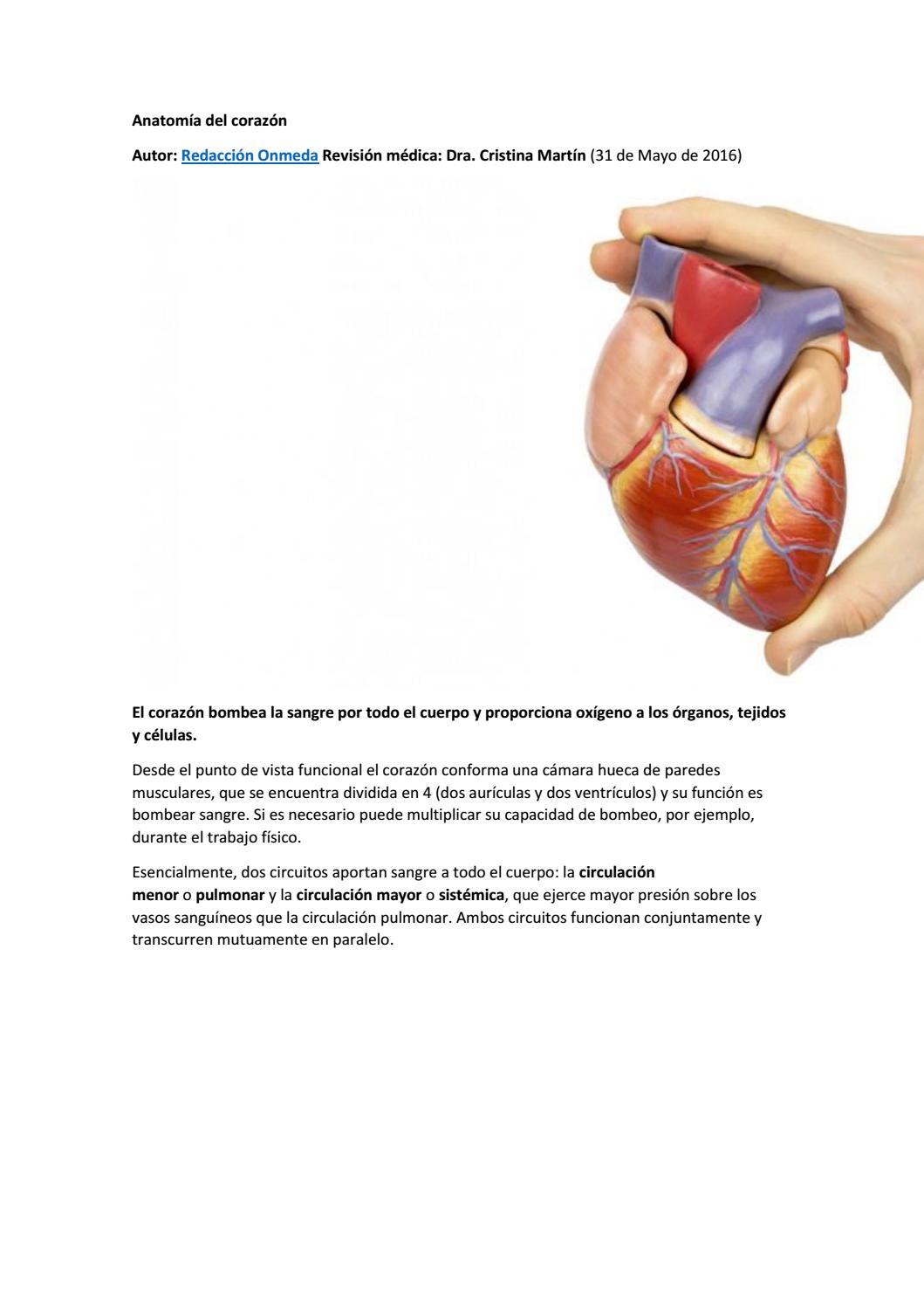 Anatomía del corazón by EdiSson Lml morocho - issuu