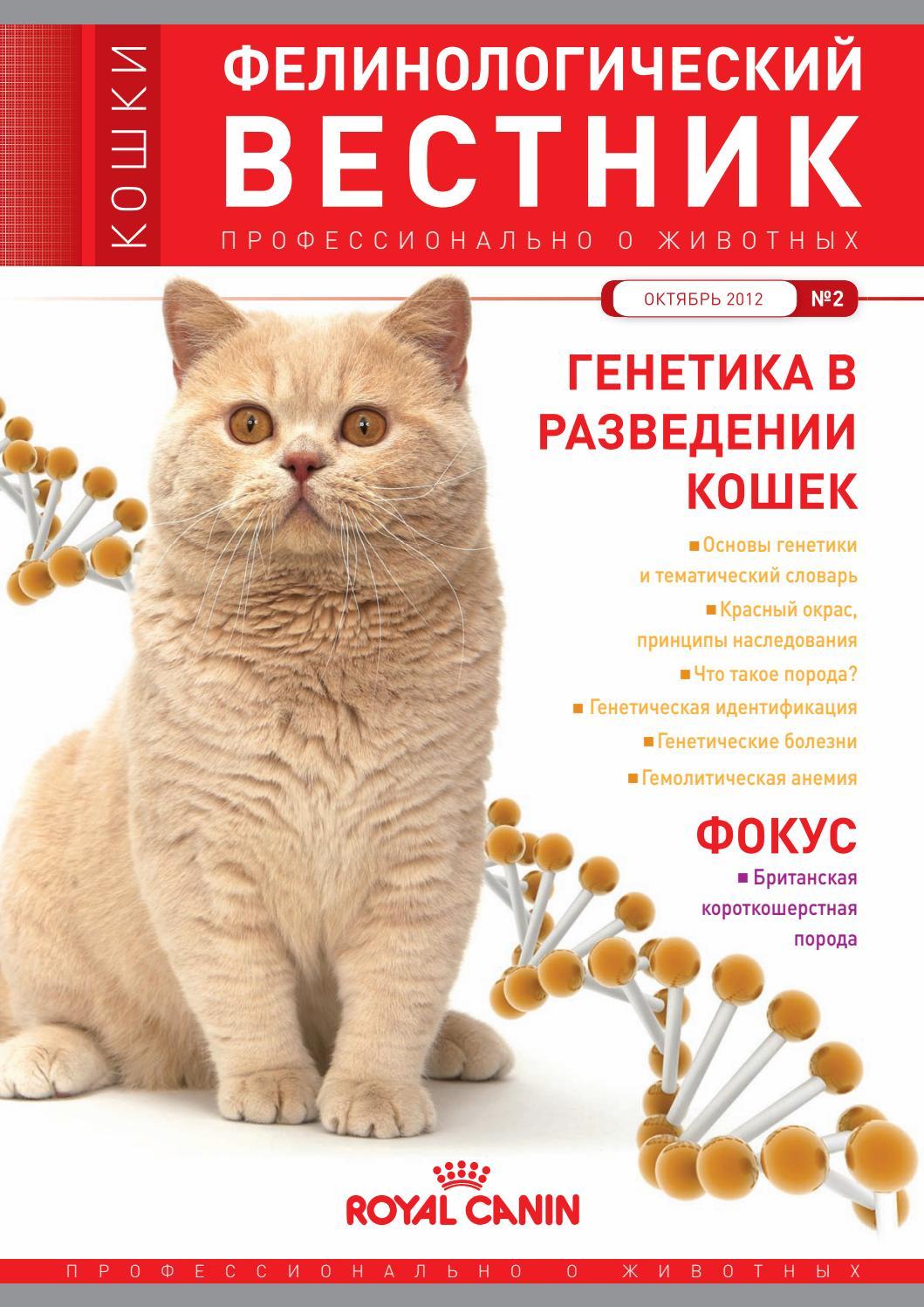 Питомники британских кошек голден стар г.кемерово казино вулкан бонус 100 рублей