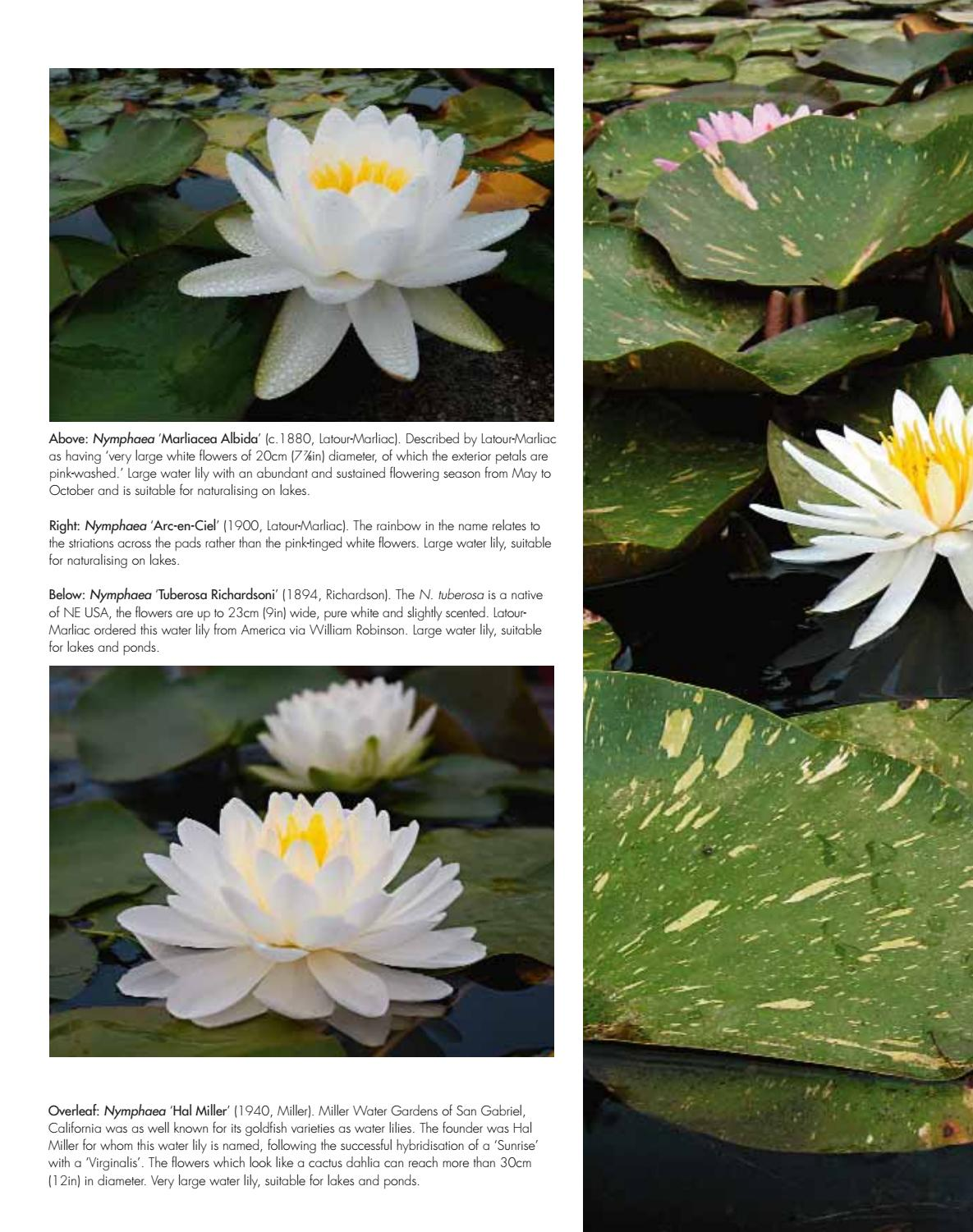 Water lilies by acc art books issuu izmirmasajfo