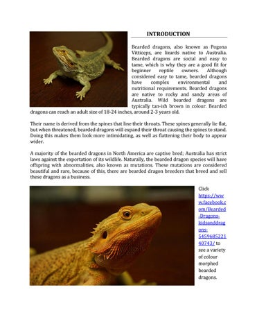 Introduction to Bearded Dragons by Naomi - issuu