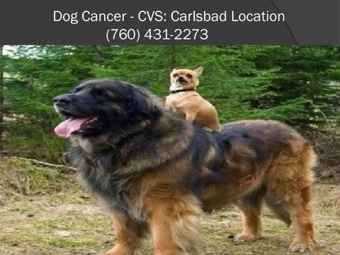 Dog Tumors by Animal Cancer - issuu