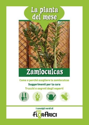 Zamioculcas la pianta del mese di novembre 2016 di for Zamioculcas cura
