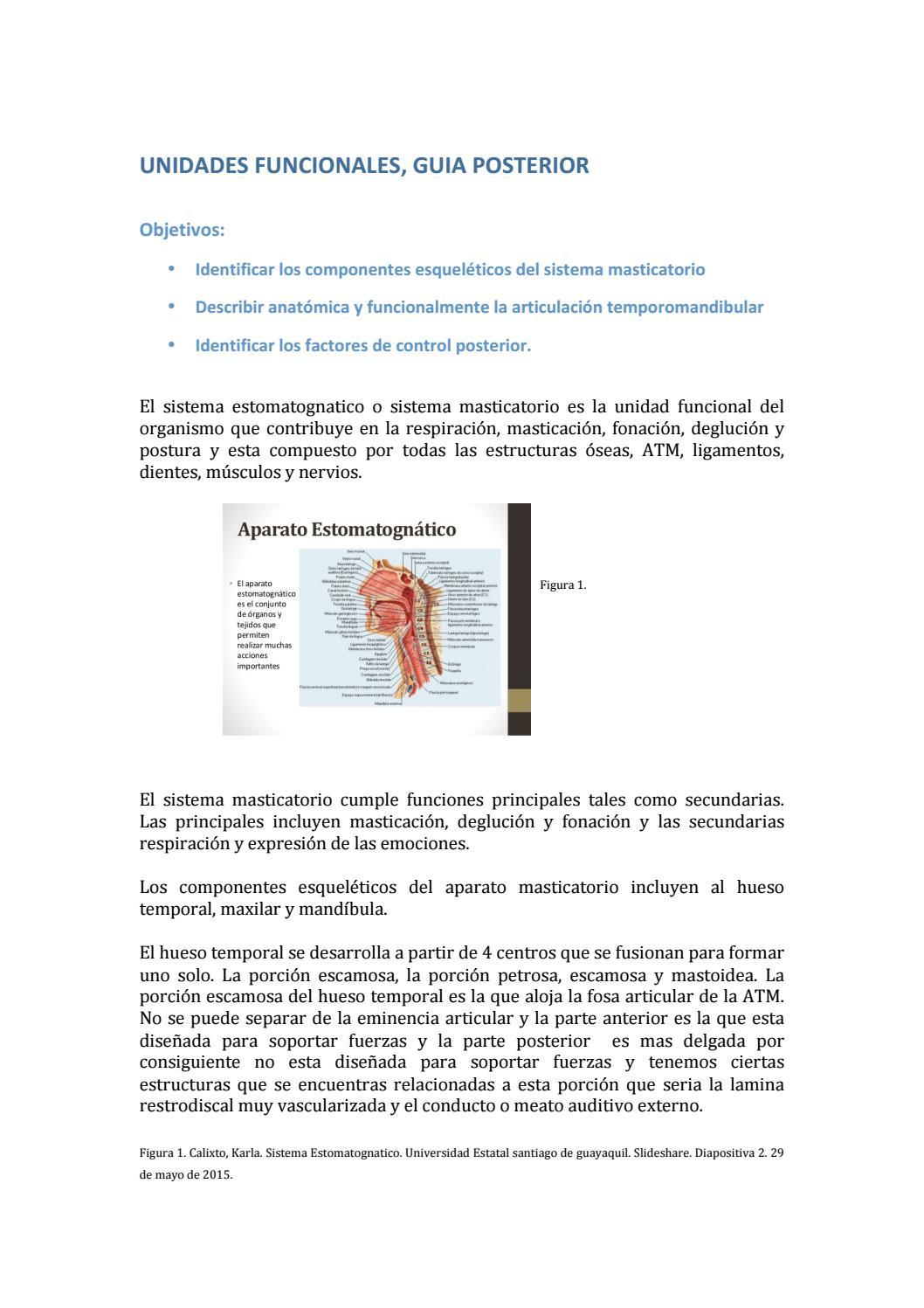 Fisiologia de la Oclusion y Oclusion Aplicada by Ed Melara - issuu