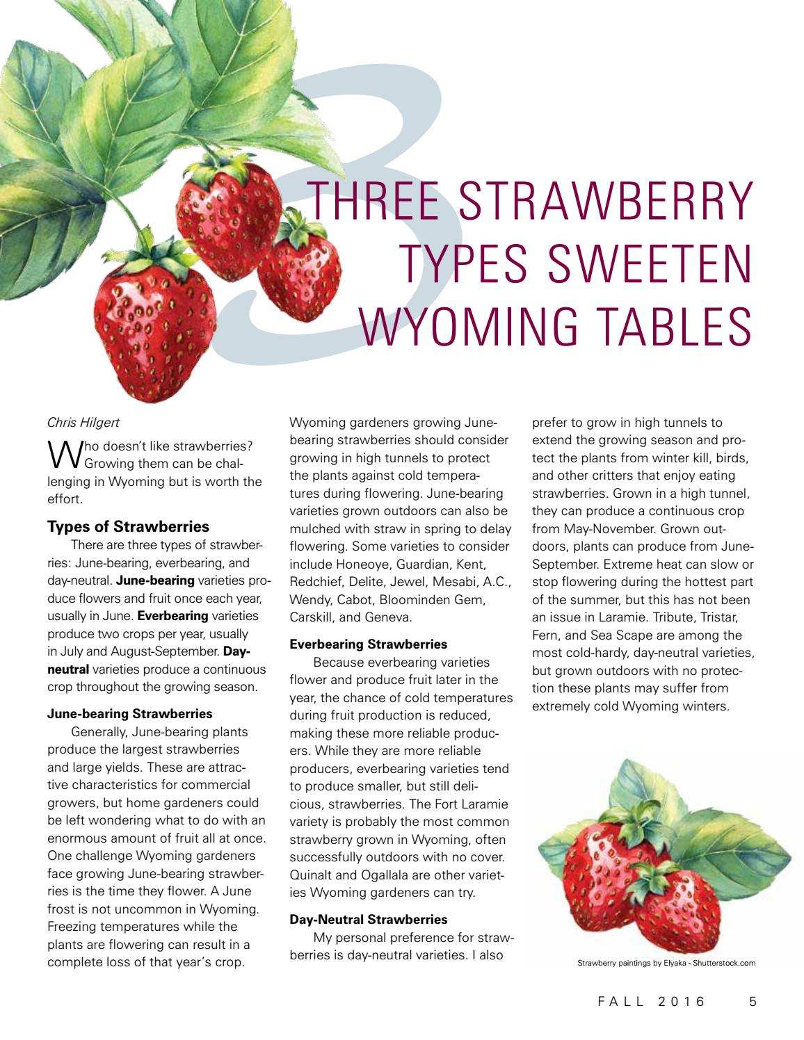 Strawberry Varieties Pictures