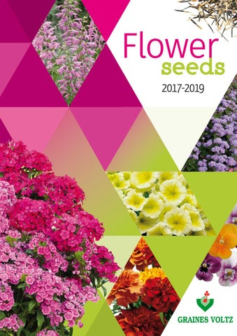 Wallflower /'Persian Carpet/' Appx 250 seeds *Free P/&P*