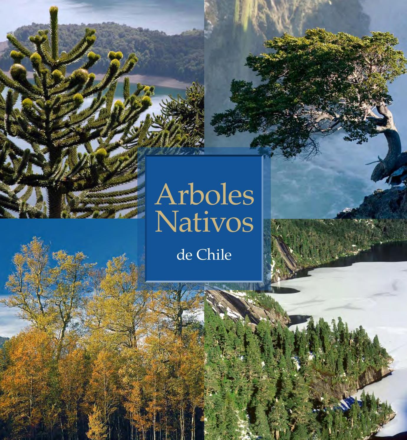 Arboles nativos de chile by direcci n de asuntos for Arboles de hojas perennes en chile