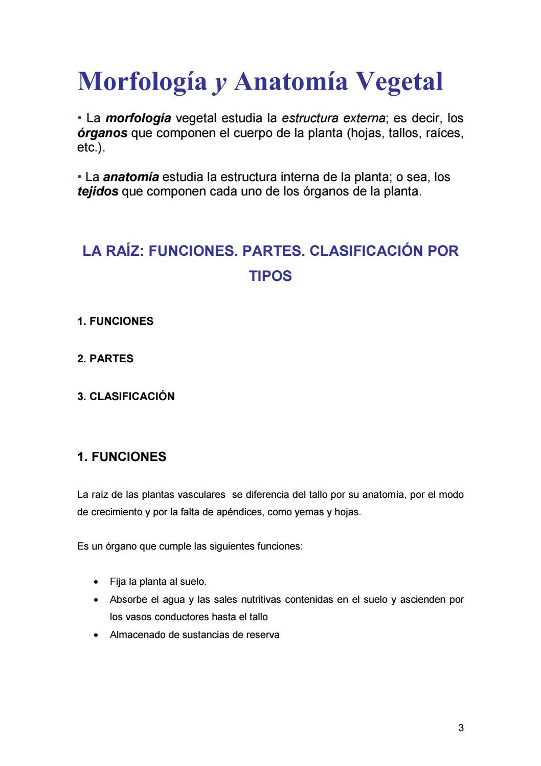 morfologia vegetal by Tatiana Tipanquiza - issuu