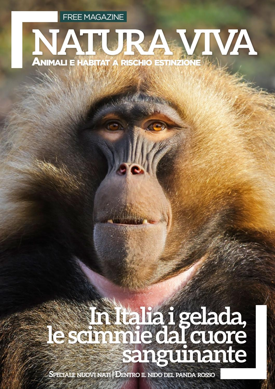 reputable site b4633 4834c Natura Viva magazine - Nov. Dic. '16 by Parco Natura Viva ...