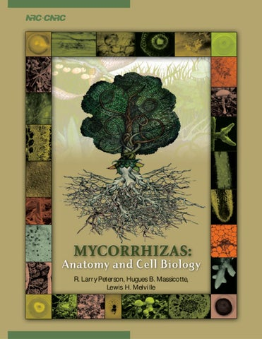 Mycorrhizas Anatomy And Cell Biology By Ana C Ponticelli Issuu
