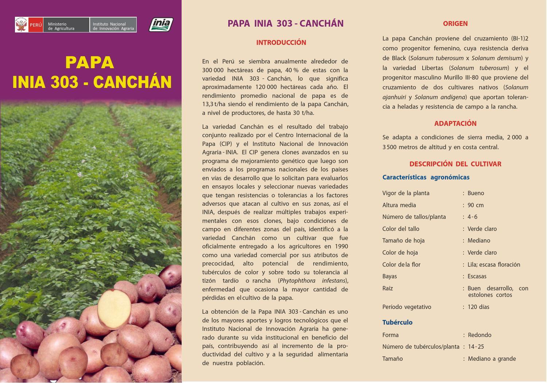 02 papa inia 303 canchan reedic by jes250s caldas issuu