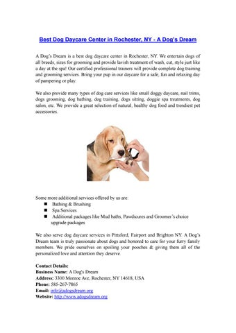 Small Dog Daycare Rochester Ny