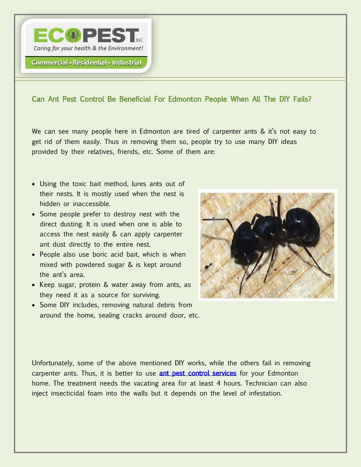 Homemade Boric Acid Carpenter Ant Bait Homemade Ftempo
