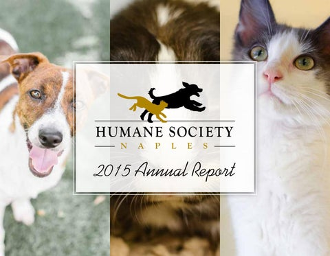 2015 HSN Annual Report by Humane Society Naples - issuu
