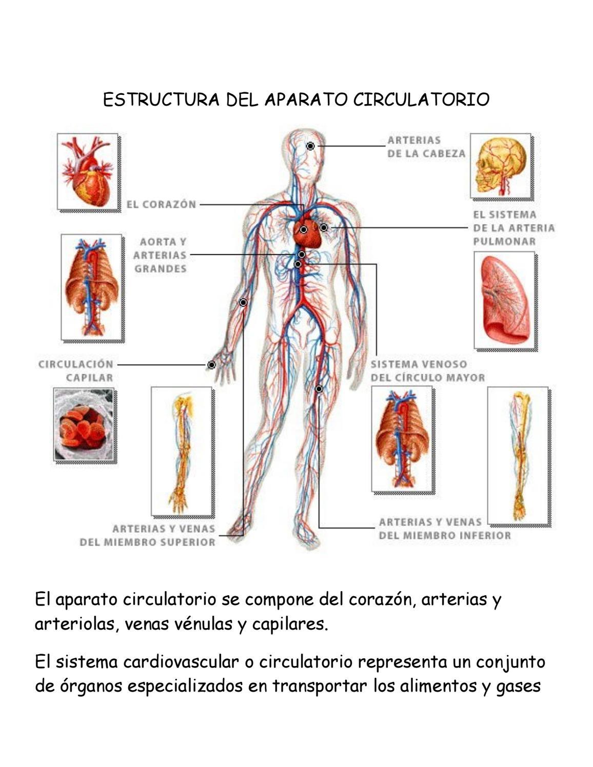 Dorable Hoja De Ruta Usmle Anatomía Componente - Anatomía de Las ...