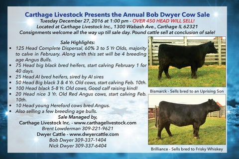 Annual Bob Dwyer Cow Sale By Dwyer Cattle Services Issuu