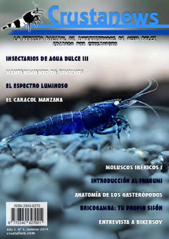 Rasbora mosquito reproduccion asexual en