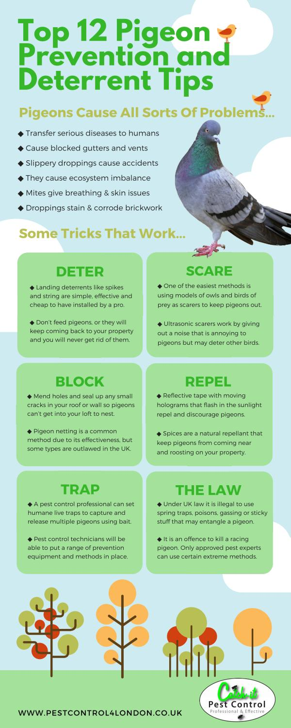 The best pigeon prevention and deterrent tips by