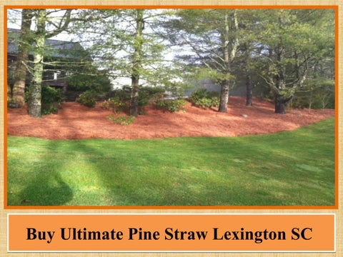 Buy Ultimate Pine Straw Lexington Sc By Taprootlawncare Issuu
