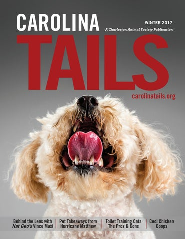 Night In Charleston I Met Katrina Dog >> Carolina Tails Pet Magazine 2017 Q1 By Traveler Communications