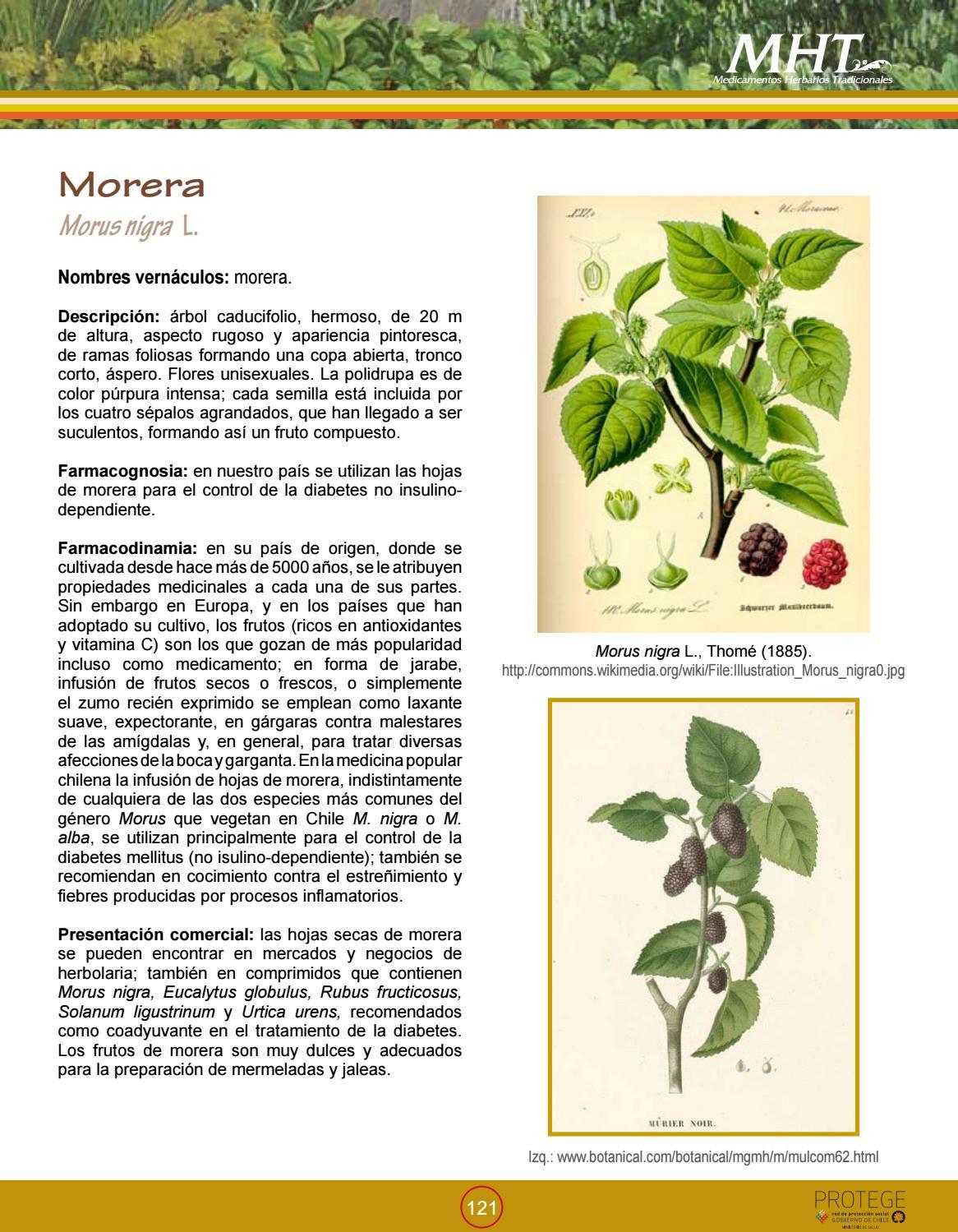 Medicamentos Herbarios Tradicionales By Fernando Ruz Chileangarden