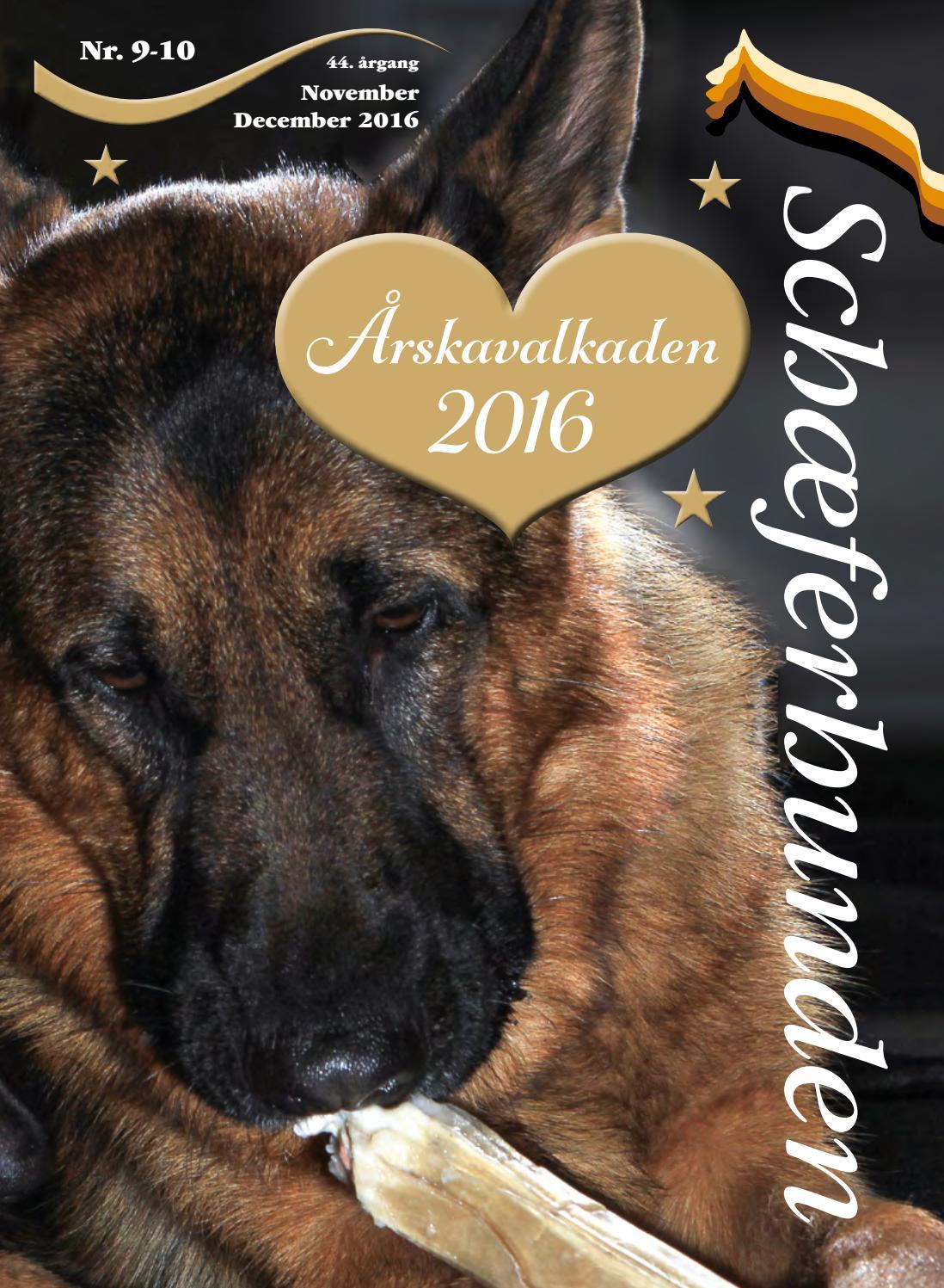 Picture of: Schaeferhunden Nr 9 10 Web By Randi Salzwedell Issuu