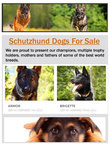 What is the difference between schutzhund and ipo