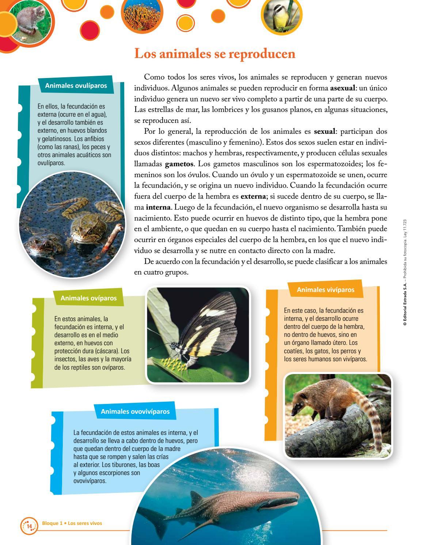 Ciencias Naturales 4 Nacion-Algo en Comun by Macmillan Publishers ...