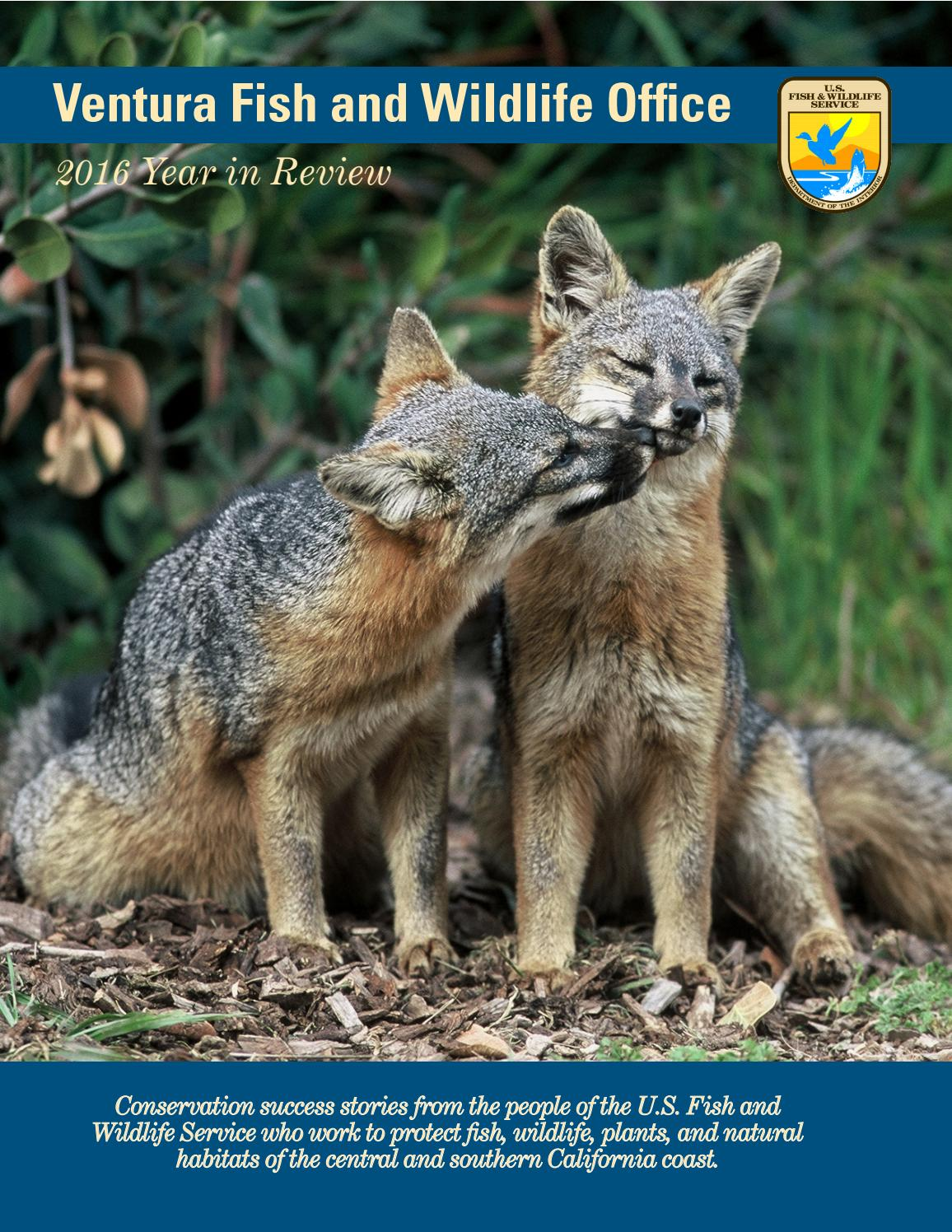 2016 year in review ventura fish and wildlife office by u for Us fish and wildlife