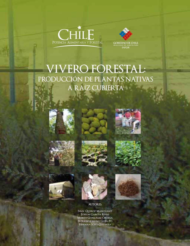 Produccion de plantas nativas a raiz cubierta en chile copia by ...
