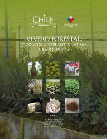 Produccion de plantas nativas a raiz cubierta en chile for Plan de negocios de un vivero de plantas