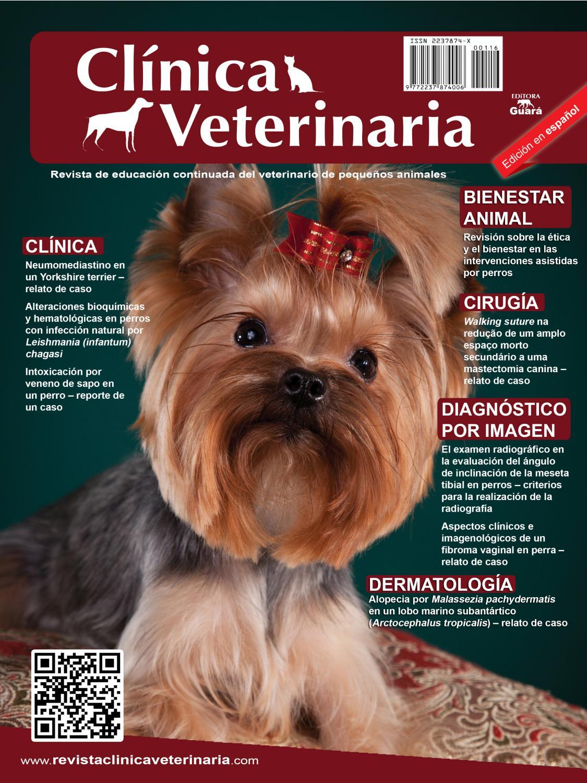 soporte de próstata para perros