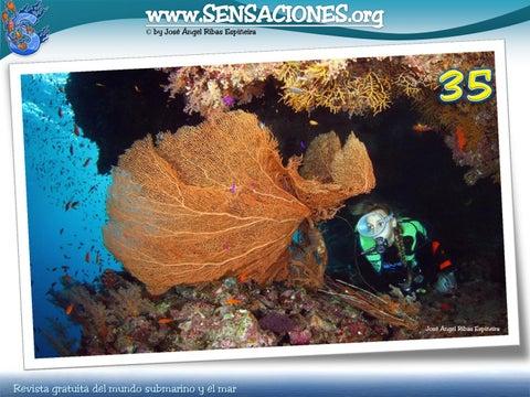 Sensaciones nº 35.- febrero 2011 by Zonacerosub - issuu e1102fb47f3