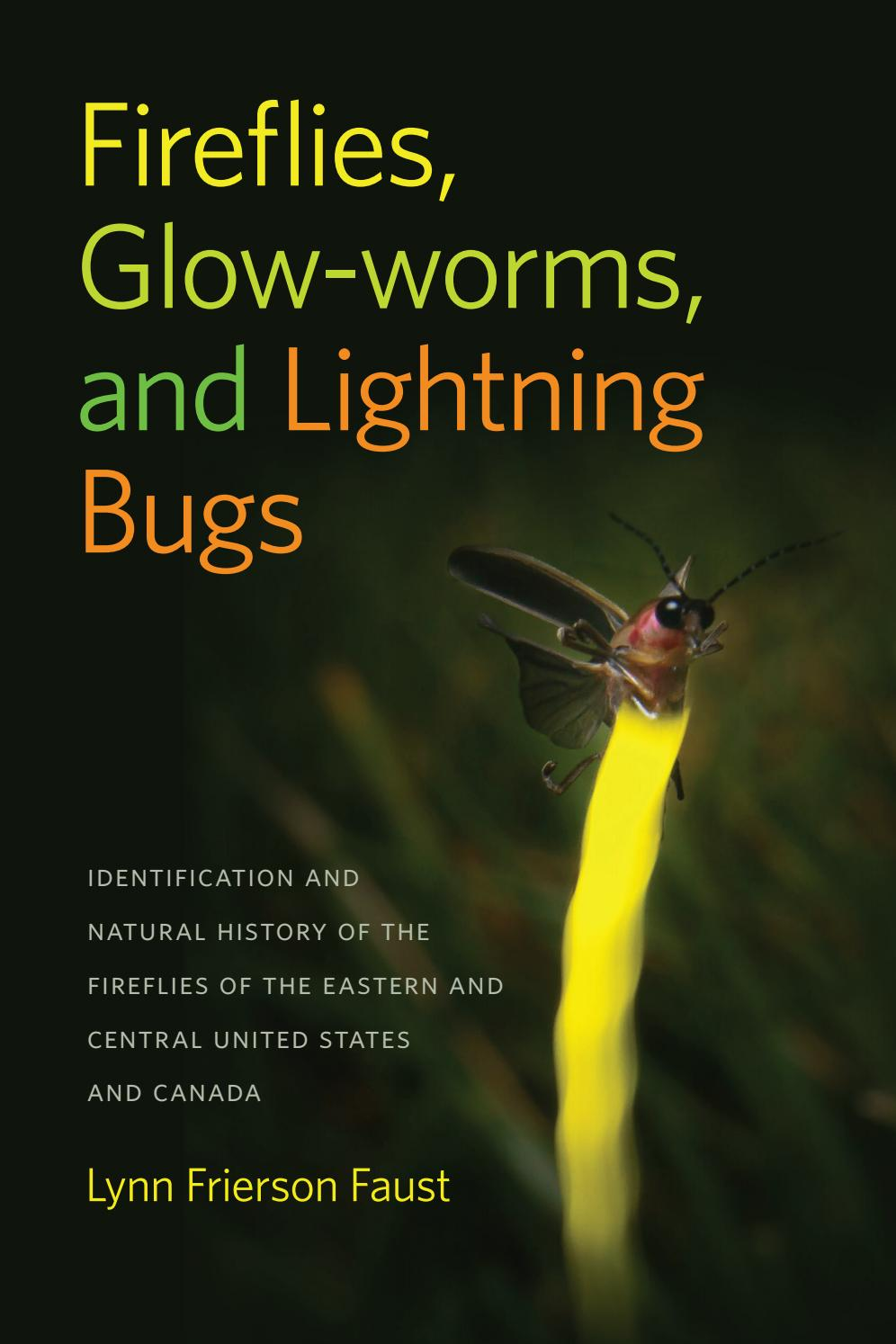 excerpt fireflies glow worms and lightning bugs by lynn