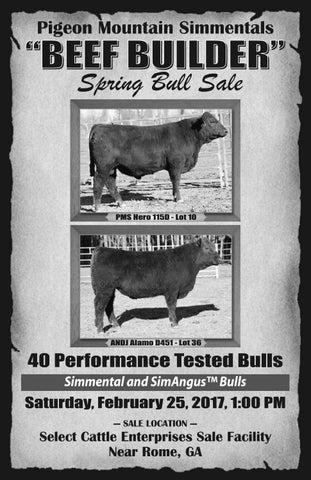 Black angus bulls for sale in georgia